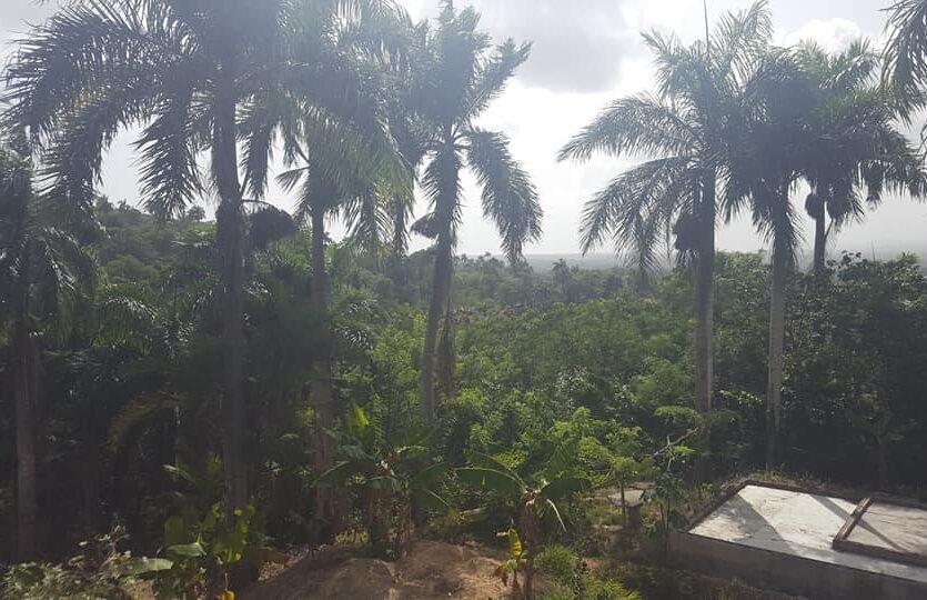 2 Bedroom Tropical Villa
